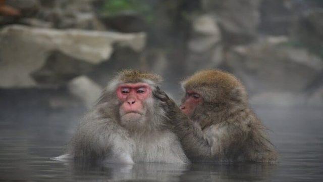 のぼせる 風呂